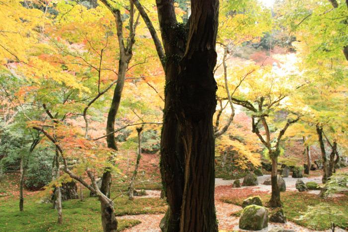 光明禅寺の裏庭