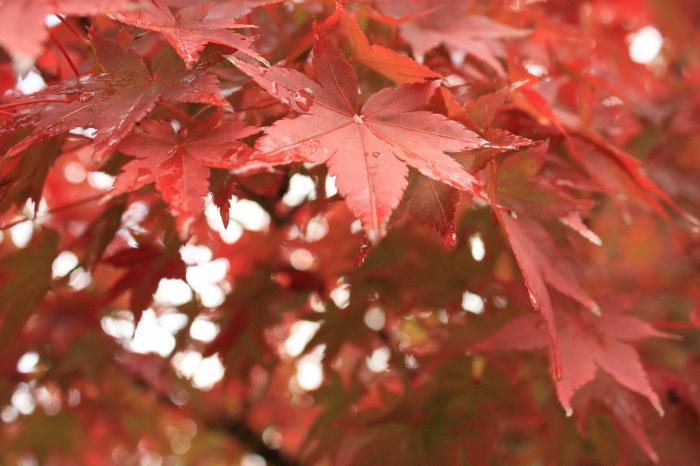 成道寺の紅葉