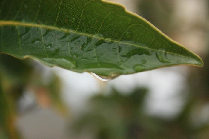 成道寺の葉っぱの写真