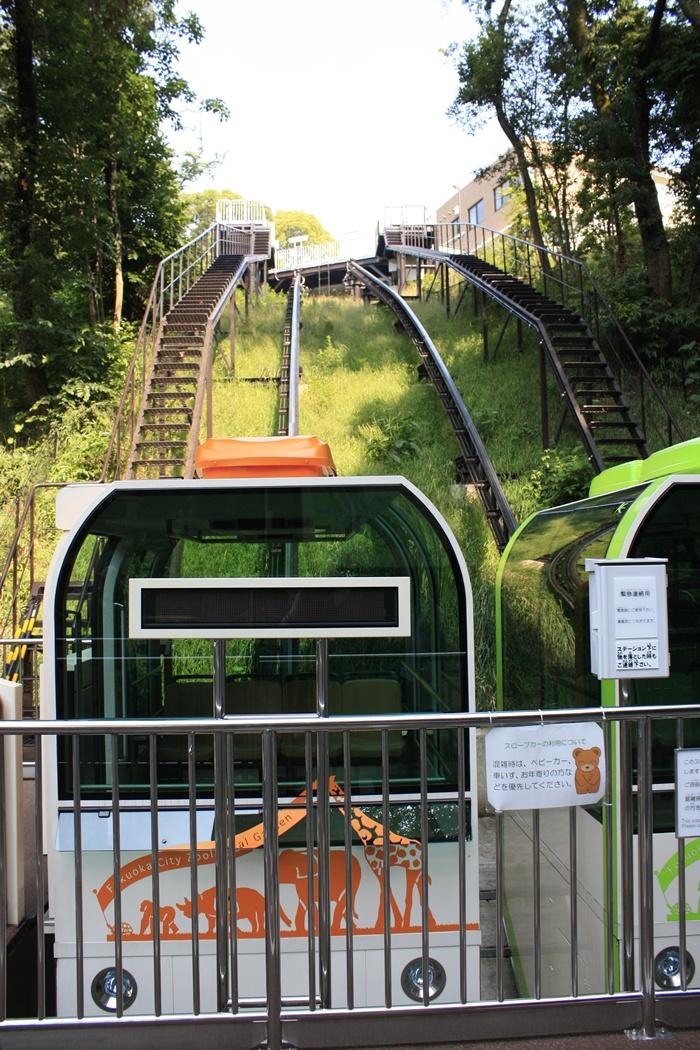 福岡市動物園から植物園へ