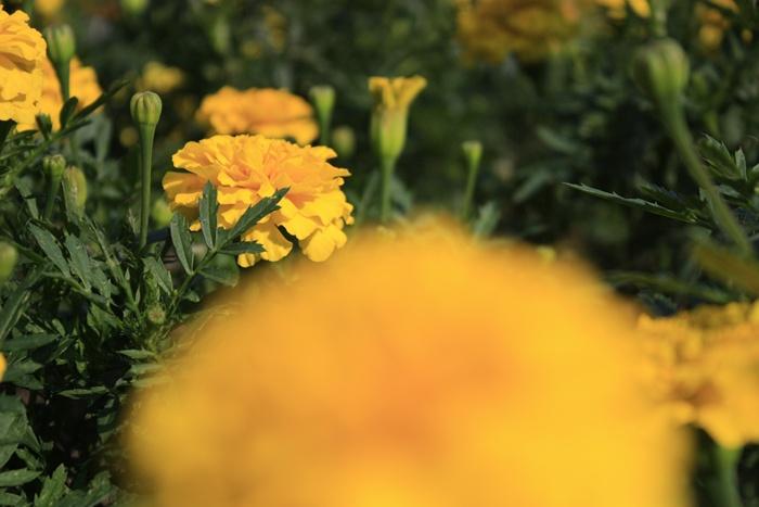 福岡市植物園の植物