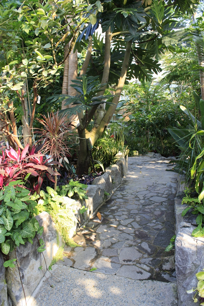 福岡市植物園の温室の中