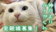 taiga-boshu-banner.jpg
