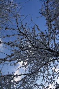 雪の向こうに青空