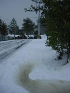 雪がいっぱい