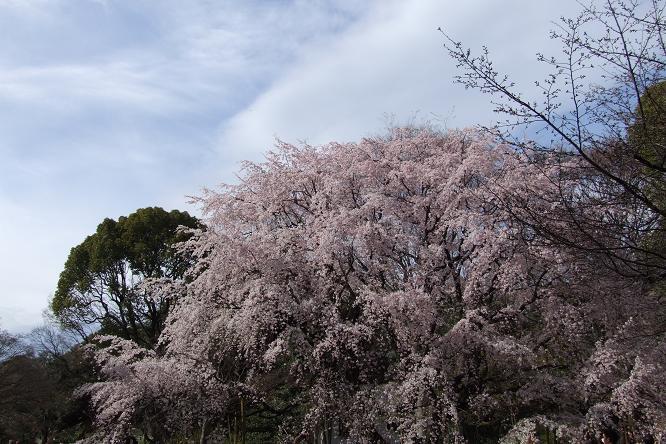 2010_0402戸田別館 0024