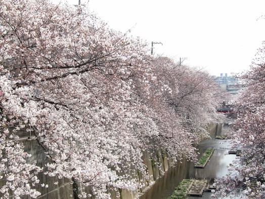 2010_0402戸田別館 0008