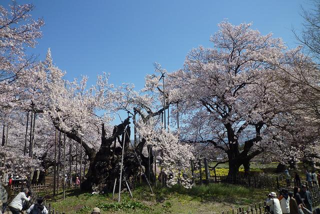 2010_0408戸田別館 0022