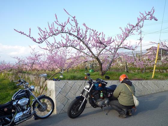 2010_0408戸田別館 0039