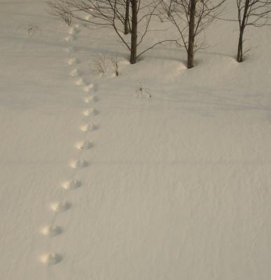 森に続く足跡