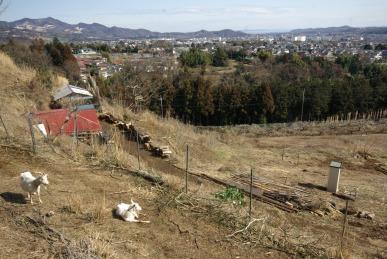 ヤギの住まいは、丘の上