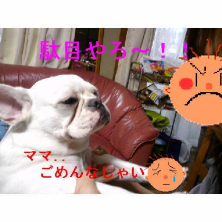 縺斐a繧薙↑縺輔>_convert_20090325235731
