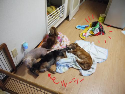 003_convert_20110718023012.jpg