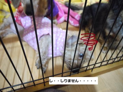 025_convert_20110507001322.jpg