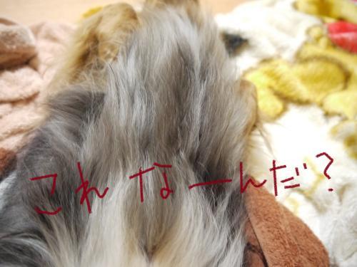 052_convert_20110526082707.jpg