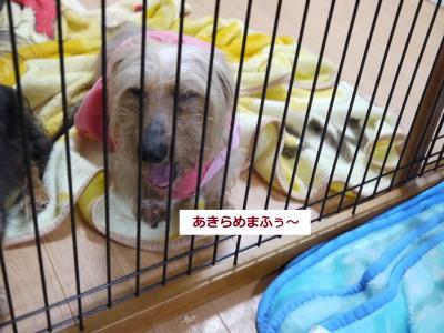 076_convert_20110519013137.jpg