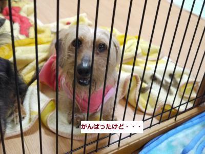 077_convert_20110519013109.jpg