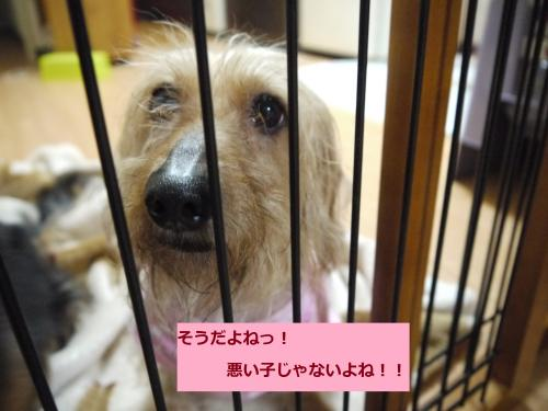 093+-+繧ウ繝斐・_convert_20110511001318