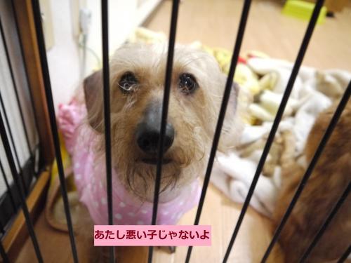 097+-+繧ウ繝斐・_convert_20110511001245