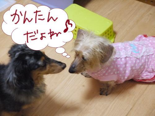 074+-+繧ウ繝斐・_convert_20110512234405