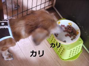 006+-+繧ウ繝斐・_convert_20110824094515