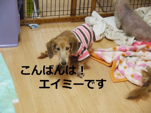 061+-+繧ウ繝斐・_convert_20111124165800 2011/11/24