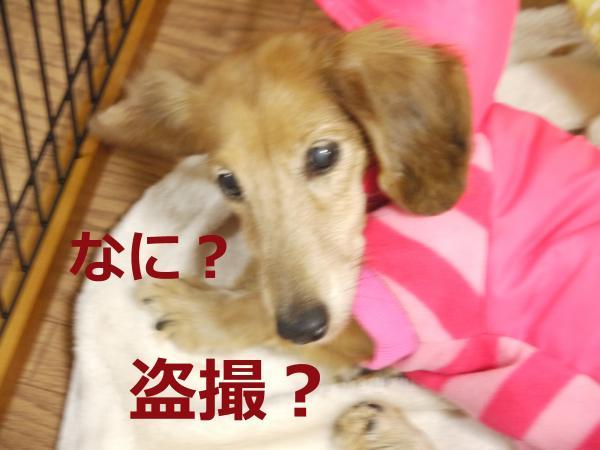 092+-+繧ウ繝斐・_convert_20111223160354 2011/12/23