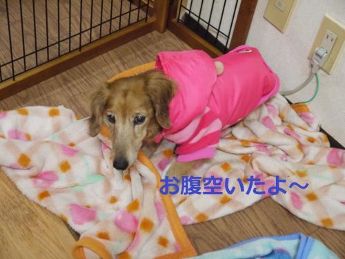 024+-+繧ウ繝斐・_convert_20120124104527 2012/01/24