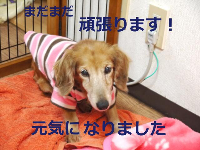 020+-+繧ウ繝斐・_convert_20120218013546 2012/02/18