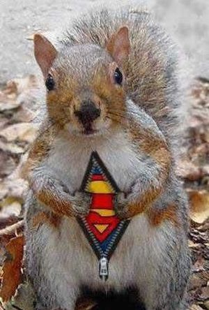 We Are The Mighty Squirrels