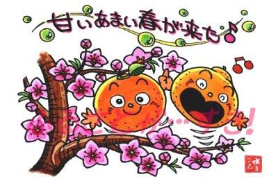 清見オレンジ2010
