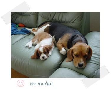 momo-ai.jpg