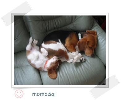 momo-ai2.jpg