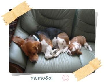 momo-ai3.jpg