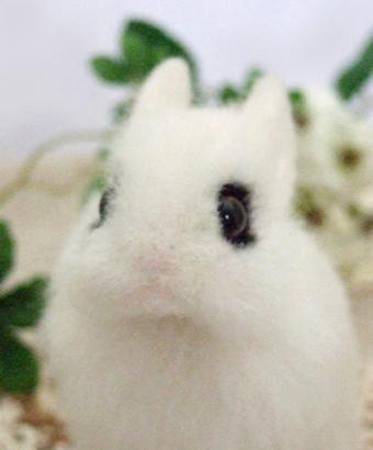 羊毛フェルトのウサギ ドワーフホト