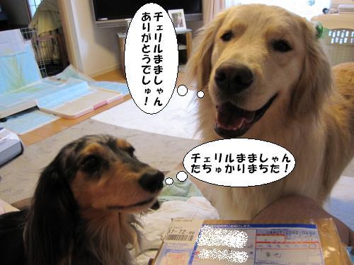 IMG_3704_convert_20110327191115.jpg