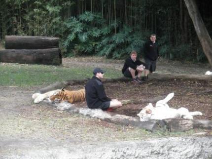 飼育員とトラ