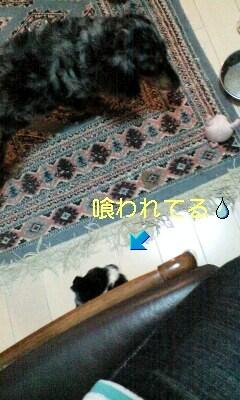 090524_2013~0001-0001