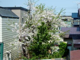 桜F700