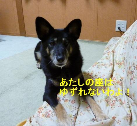 1_20100103161426.jpg
