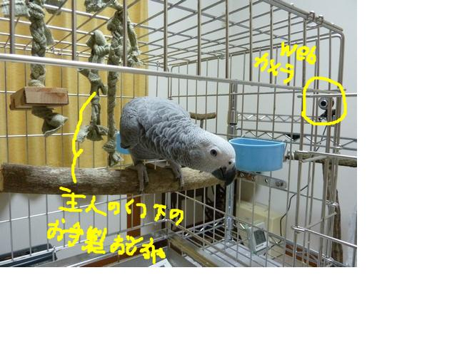 snap_galatia62_201015192746.jpg
