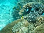 海の中のサンゴ礁2