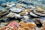 海の中のサンゴ礁1