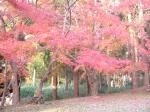 秋月の紅葉2