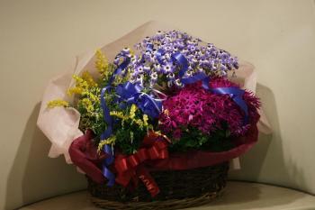 3月玄関の花