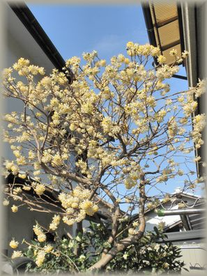 10白い花下