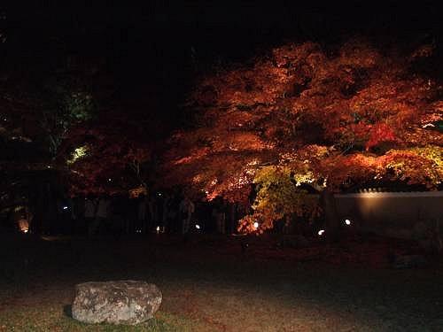 高台寺(紅葉ライトアップ)