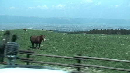 阿蘇の放牧場。主に食用に飼育されている牛や馬が見れる