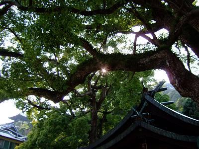 「時をかける少女」に登場した艮(うしとら)神社にある樫の御神木