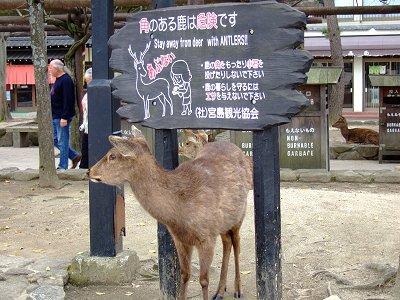 宮島 神獣の鹿